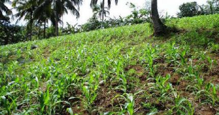 Paraquat system saves soil in the Philippines